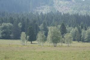 Lýkožrout ničí zdravé tatranské lesy, nastal čas jednat