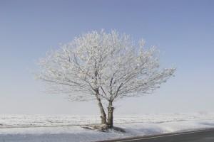 růst ročních průměrů teploty vzduchu