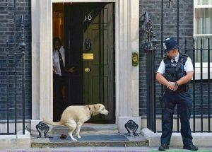 pes projevil občanskou neposlušnost